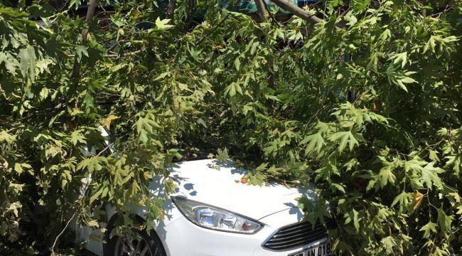 Çürüyen ağacın dalı park halindeki otomobilin üzerine devrildi
