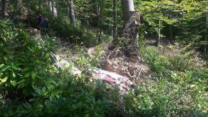 - Devrilen ağaç ölüme neden oldu