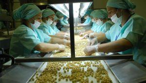 Avrupa'ya dokuz ayda yaklaşık 8 bin 392 ton iç fındık ihraç edildi