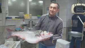 - 100 kilo fındığı olan bu balığı alabilir
