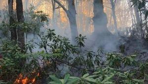 - Fındık bahçesindeki kıvılcım ormana sıçradı