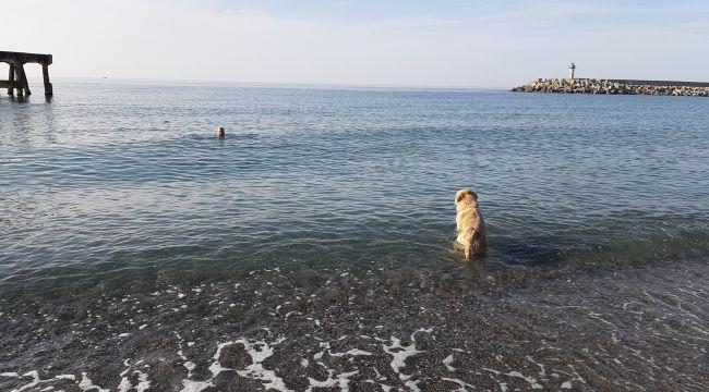 - Soğuğa aldırmadan denize girdiler