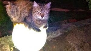 - Sokakta üşüyen kedi ısınmak için bu yolu seçti