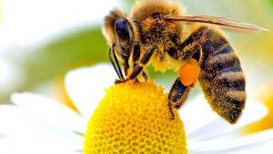 """- Doç. Dr. Kekeçoğlu: """"Arılar olmazsa yarınlar olmaz"""""""