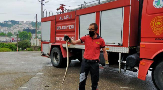 - Namaz sırasında 2 metrelik yılan paniğe neden oldu