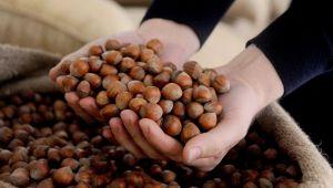 AB ülkelerine Mayıs ayında bin 540 ton 545 kilo fındık ihraç edildi