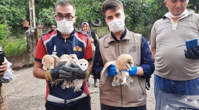 Banyo boşluğunda kalan yavru baykuşlar kurtarıldı