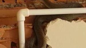 - Bayılan işçinin yanına koştuklarında tuğlaların içinde yılanla karşılaştılar