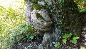 - Gövdesinde el figürü olan ağaç ilgi odağı oldu