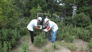 - Köknar ağaçlarını komandolar koruyacak