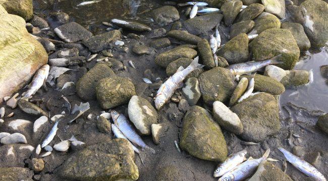 - Barajda su seviyesi düştü, binlerce balık telef oldu