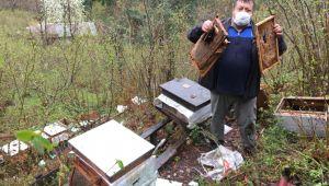 - Yiyecek arayan ayı arı kovanlarını parçaladı