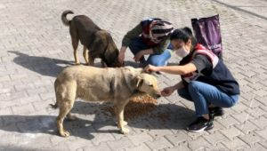 - Jandarma sokak hayvanlarını unutmadı