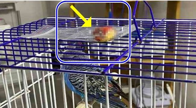 Küçücük kuşun karnında bu çıktı...
